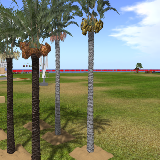 palm-Moderate_2020-11-03.png